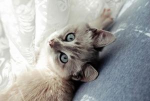 Nettoyage de meubles avec urine de chat