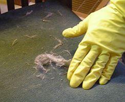 Nettoyer des meubles avec des poils d'animaux